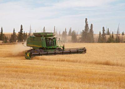 Combine harvesting on uplands